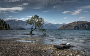 Picture lake, tree, boat