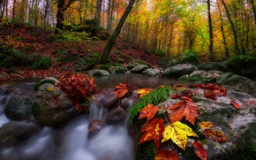 Wallpaper stones, nature, trees, leaves, stream, landscape, autumn, forest
