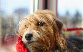 Picture sadness, dog, window