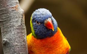Picture tree, bird, beak, parrot