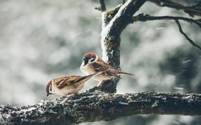 Picture winter, birds, nature