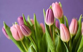 Wallpaper nature, flora, plant, blossom, tulips, bloom, tulips, leaves, bouquet, flowers