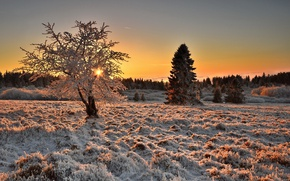 Picture winter, frost, field, nature, tree, morning