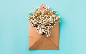 Picture flowers, background, white, white, flowers, the envelope, spring