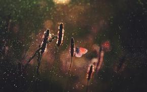 Wallpaper drops, grass, glare, butterfly, butterfly, bokeh, light, macro