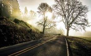 Wallpaper road, morning, fog