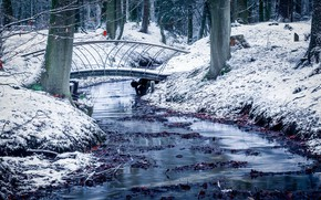 Picture snow, Park, Netherlands, Guelders, Velp
