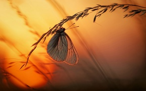 Wallpaper sunset, grass, the sun, butterfly, light, macro