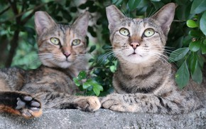Picture nature, stay, cats, pair