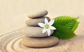 Picture sand, flower, stones, flower, sand, Spa, stones, spa, zen