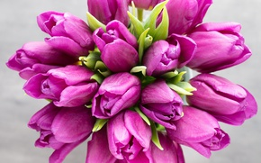 Picture flowers, bouquet, tulips, pink, fresh, pink, flowers, beautiful, tulips, spring, purple