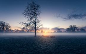 Picture field, morning, fog, sunrise, dawn, London, England, Morden Hall Park