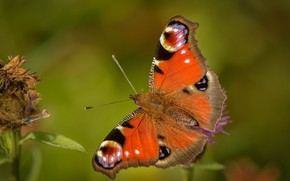 Picture background, butterfly, leaves