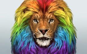 Picture face, Leo, art, mane, color