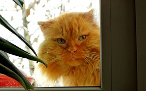 Picture cat, cat, in the window, the sight of a cat