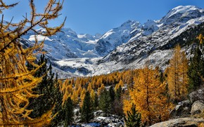 Wallpaper Switzerland, Alps, mountains, Switzerland, Morteratsch Glacier, trees, The Morteratsch Glacier, Bernina, Bernina Range, Alps, autumn