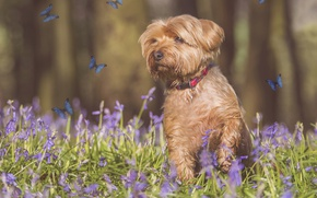 Picture butterfly, flowers, photoshop, dog