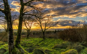 Wallpaper the sky, grass, clouds, trees, sunset, branches, dawn, field, moss, horizon, UK, the bushes, Northern ...