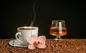 Picture flower, wine, glass, coffee, hot, couples, Cup, drink, black background, Orchid, saucer, grain, bokeh