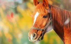 Picture face, background, horse, horse