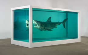 Wallpaper Shark, formalin, The physical impossibility of death in soznanii living, Damien Hirst