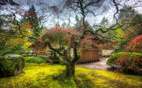 Picture tree, HDR, garden, Portland, Trees, Japanese, Garden