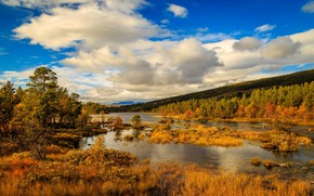 Picture autumn, forest, the sky, the sun, clouds, trees, river, yellow, Norway
