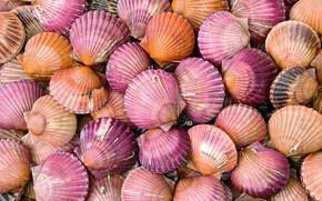 Picture sea, sink, shell, scallop