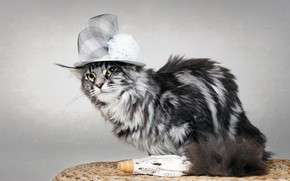 Picture cat, background, hat