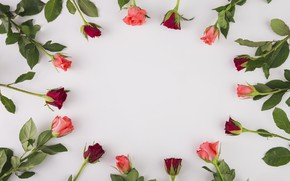 Picture Flowers, Background, Buds, Roses