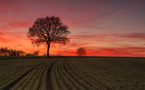 Picture field, sunset, tree