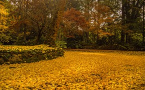 Picture autumn, leaves, trees, pond, Park, yellow, Australia, Alfred Nicholas Memorial Gardens