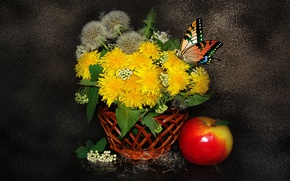 Picture BUTTERFLY, Still life, DANDELIONS, BEAUTY, THE WALLPAPERS