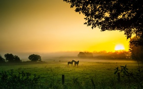 Picture field, the sun, fog, horses, morning
