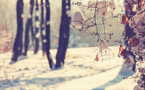 Picture winter, leaves, snow, branches, branch, trunks, focus