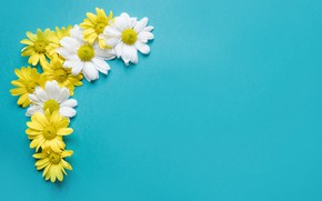 Picture flowers, background, chamomile, flowers, spring, composition