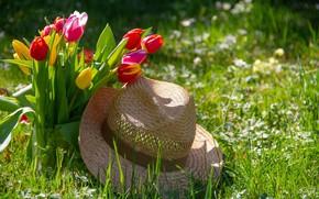 Picture Flowers, Tulips, Bouquet, Hat