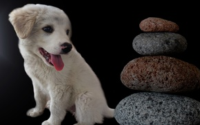 Picture stones, dog, puppy