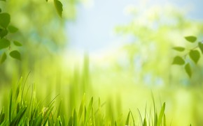 Picture grass, leaves, the sun, meadow