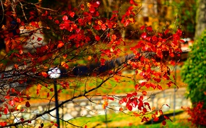 Picture Autumn, Park, Fall, Park, Autumn, Red leaves, Red leaves