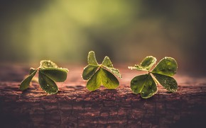 Picture macro, background, clover