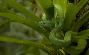 Picture leaves, green, snake