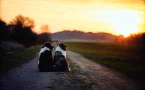 Picture road, dogs, morning