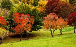 Picture autumn, grass, color, trees, Park, slope, Australia, Mount Lofty Botanic Garden