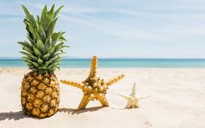 Picture sand, sea, beach, summer, stay, star, summer, pineapple, beach, vacation, sea, sand, pineapple, vacation, starfish