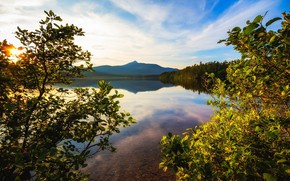 Picture trees, landscape, branches, lake