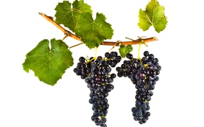 Picture wine, leaves, grapes, red wine, vitis vinifera, Petite Verdot