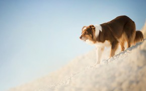 Picture slope, red, dog