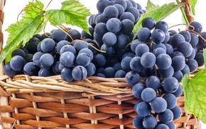 Picture berries, grapes, basket