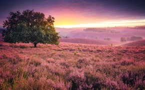 Picture grass, flowers, tree, hills, England, glow